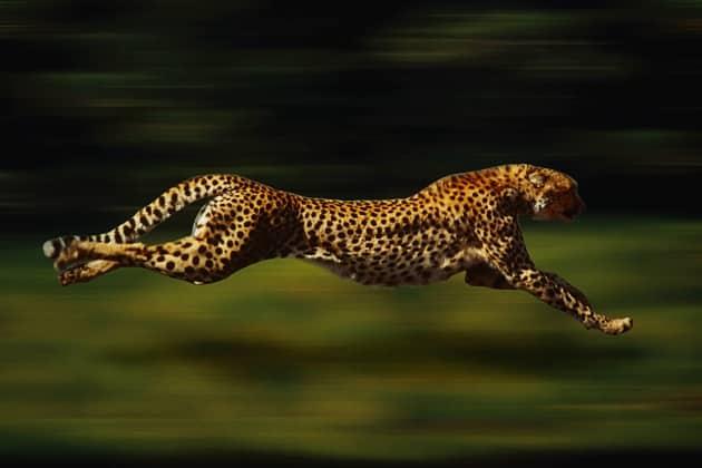 Velocità animali
