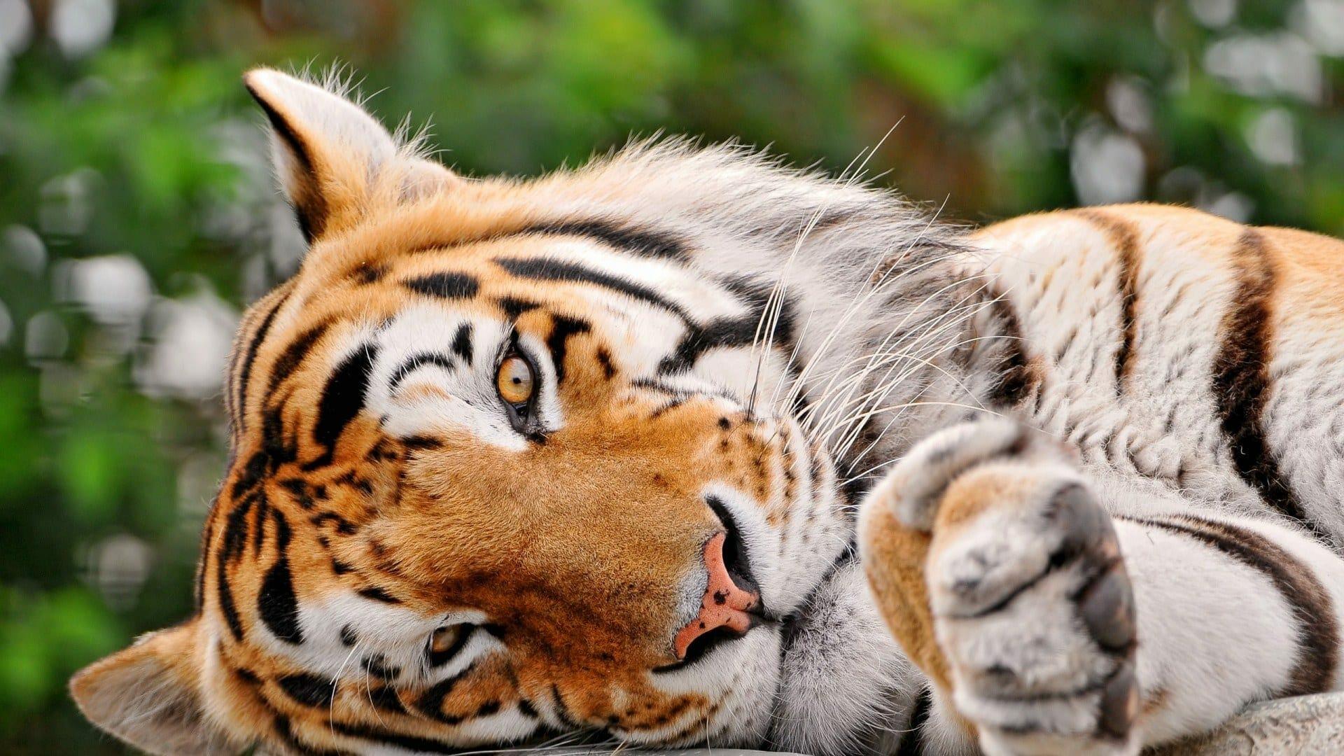 Vita media animali quiz concorsi pubblici for Animali desktop